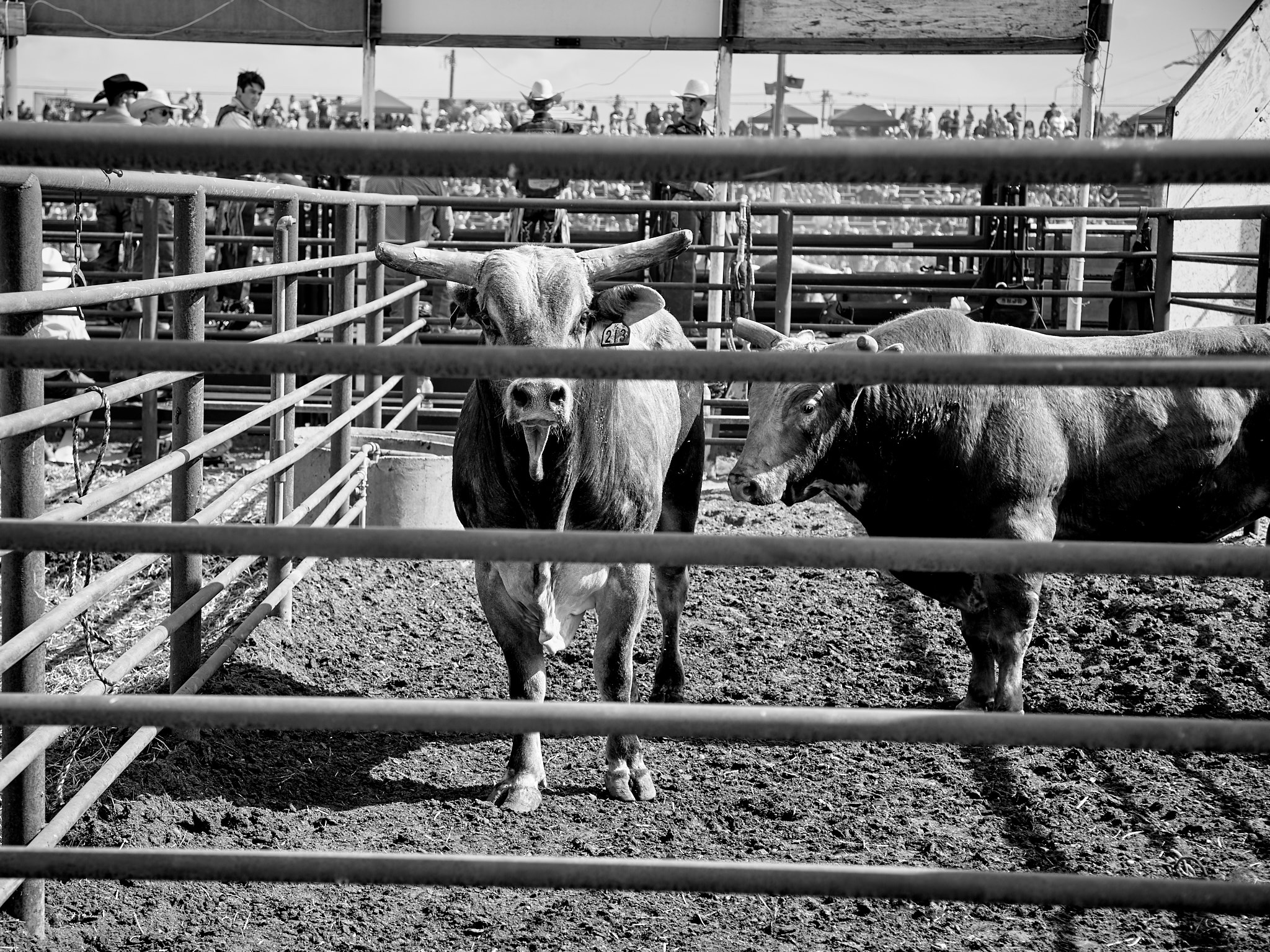Rodeo_2019_987.jpg