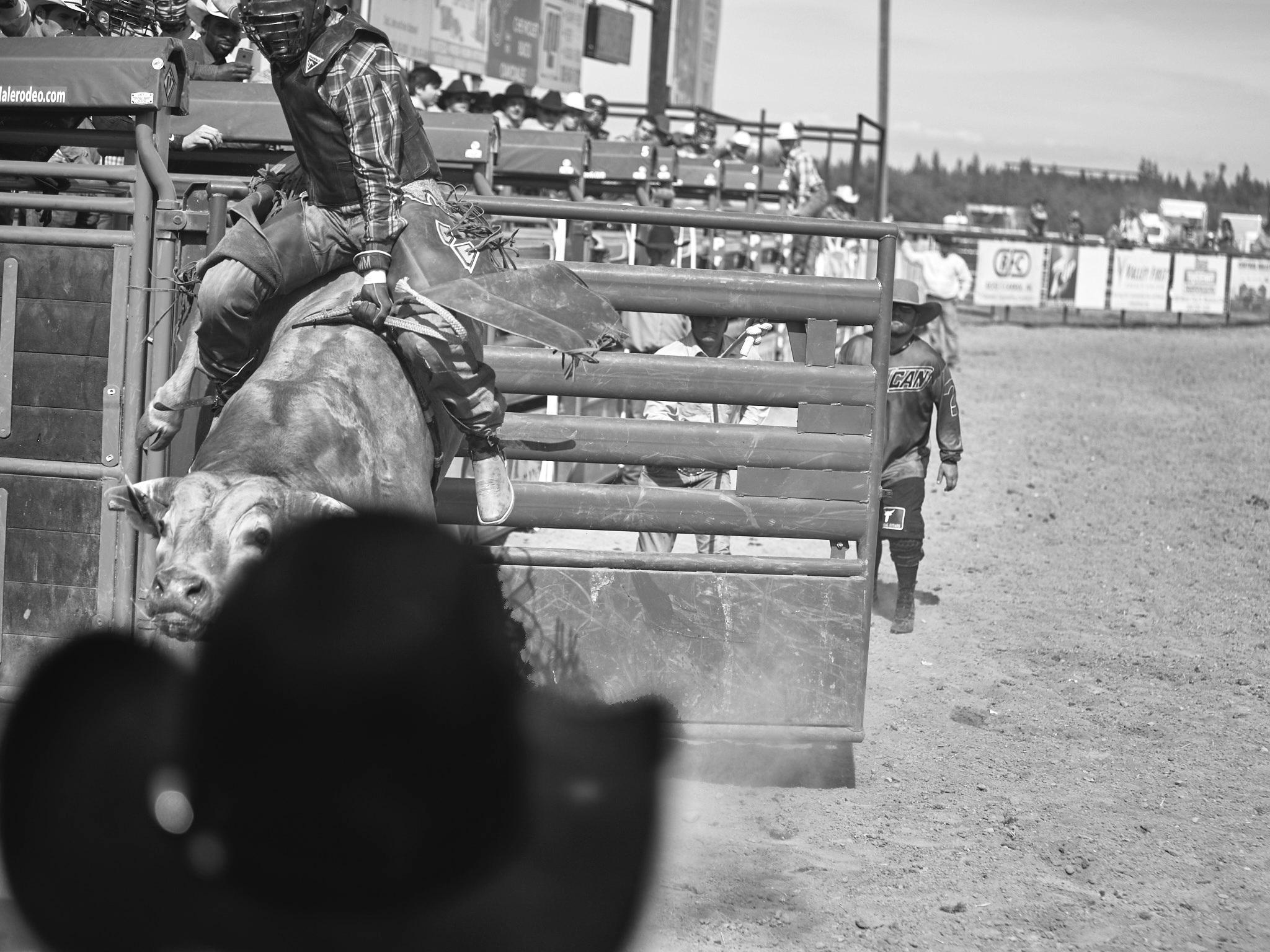 Rodeo_2019_997.jpg