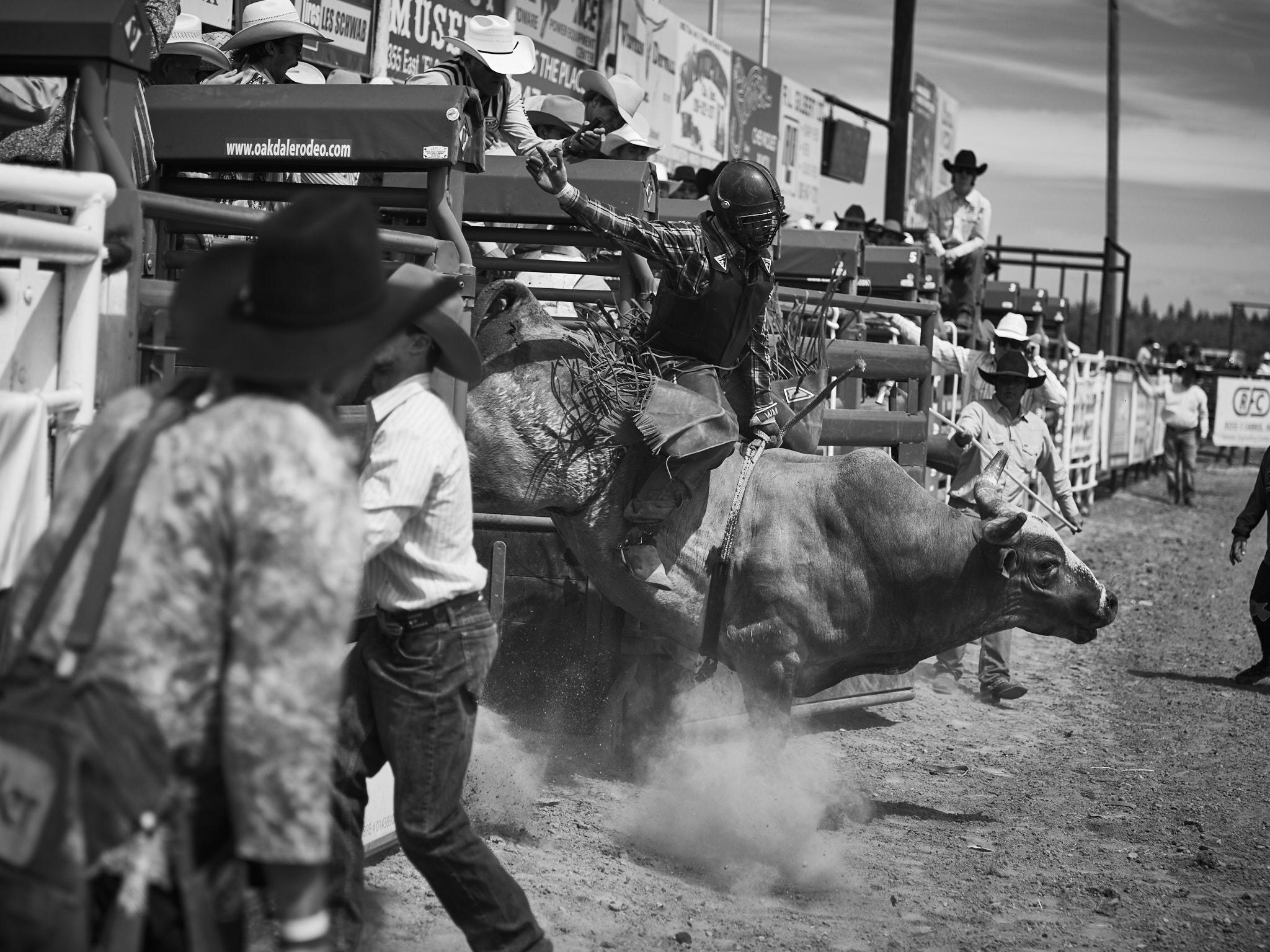 Rodeo_2019_223.jpg