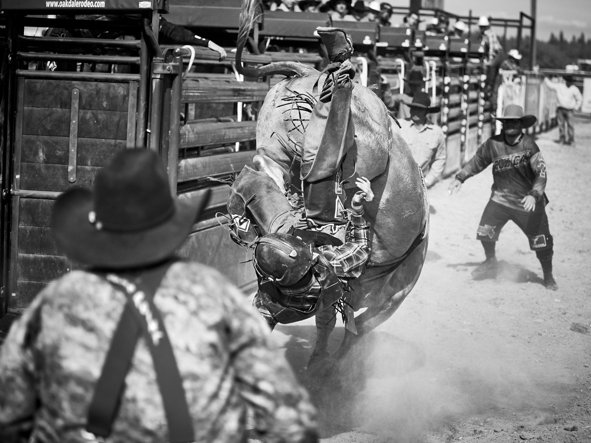 Rodeo_2019_1004.jpg