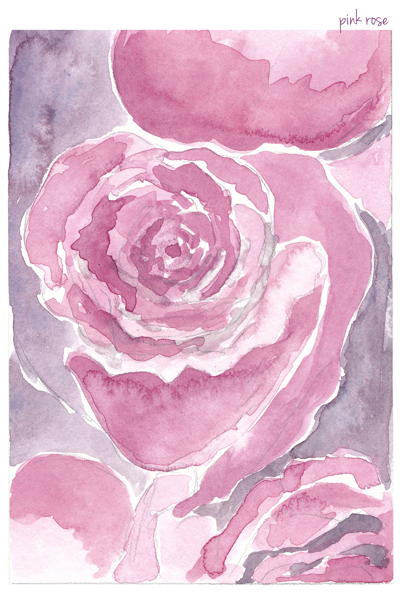 rose-sketches-pink.jpg