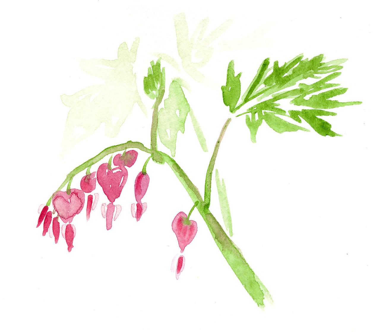 drawingsarah.com_flower2.jpg