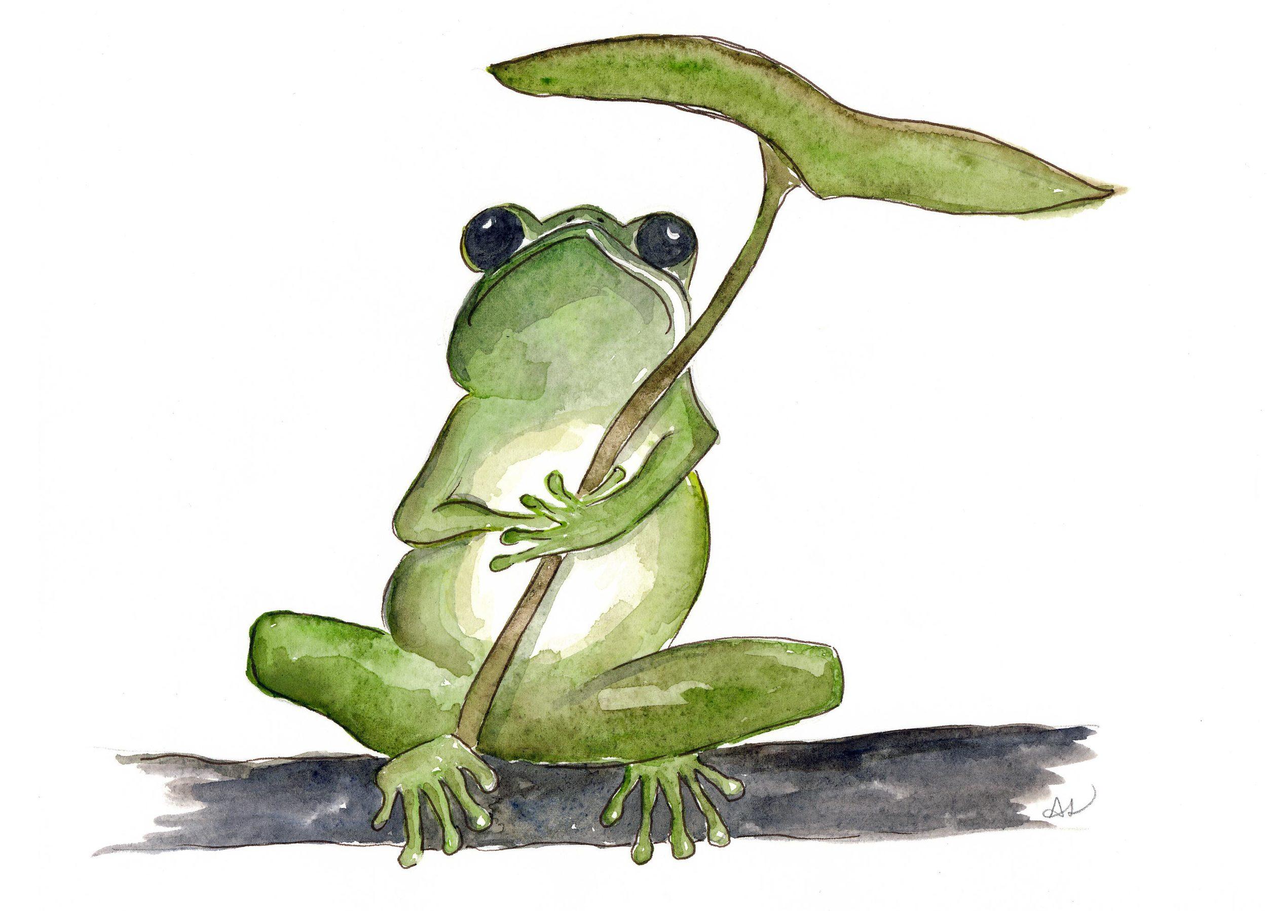 drawingsarah.com_frog.jpg