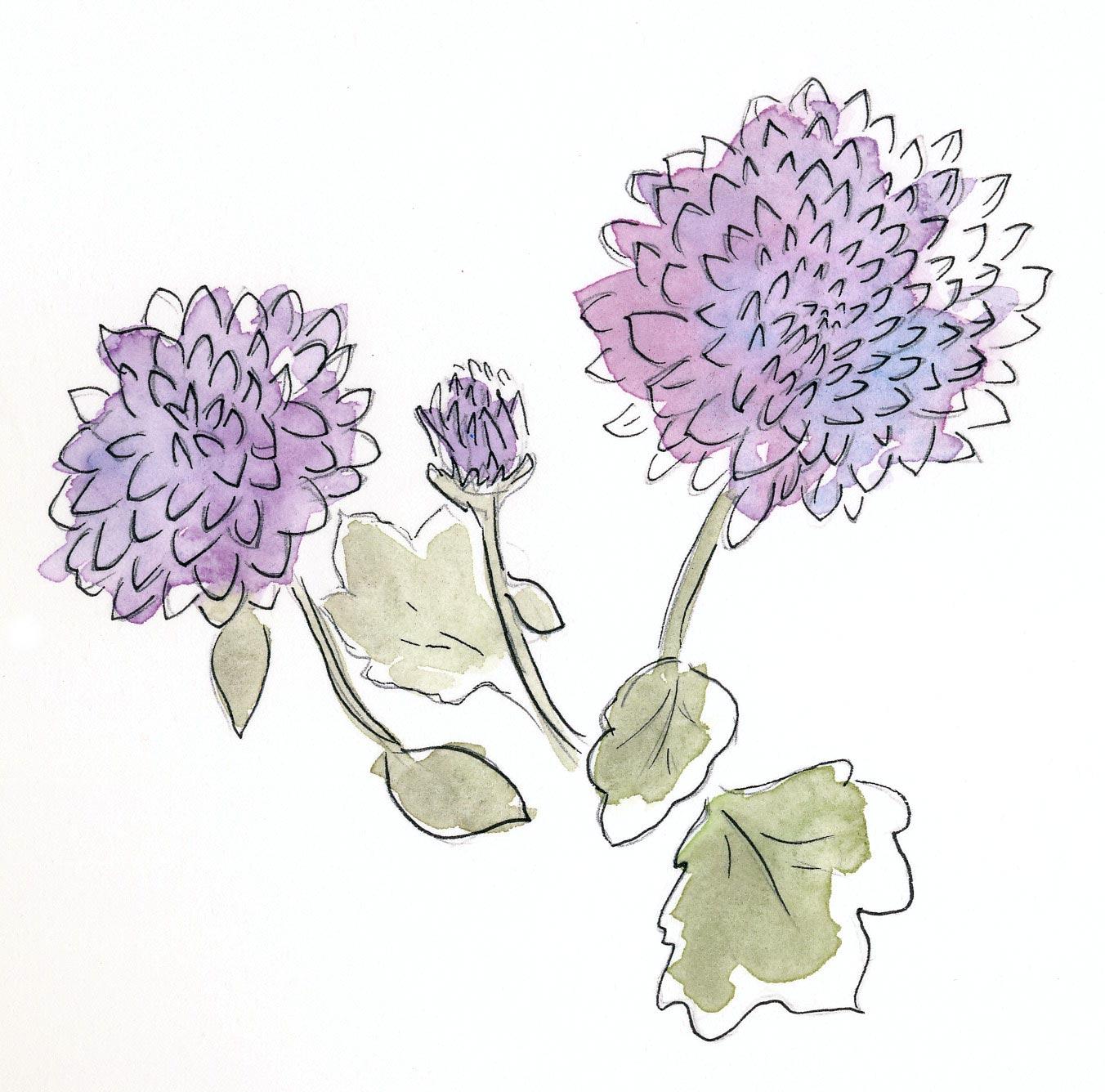 drawingsarah.com_mums.jpg