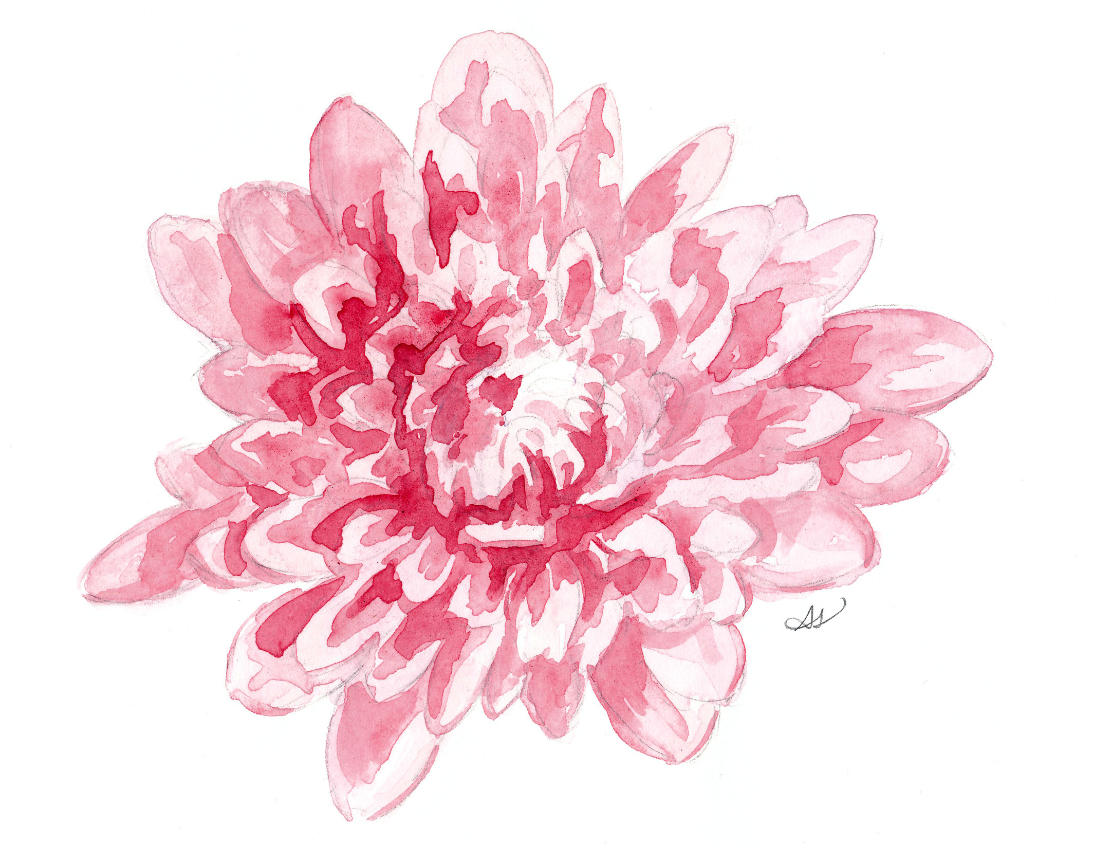 drawingsarah.com_pinkmum.jpg