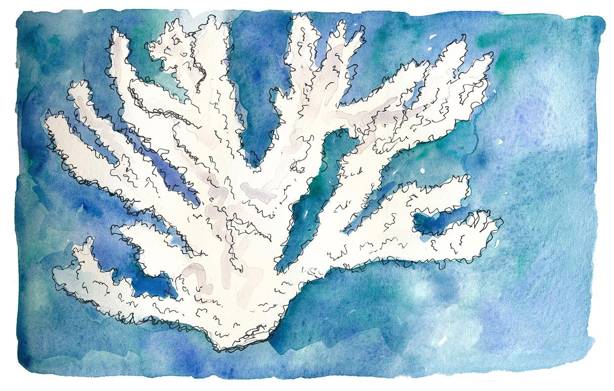 drawingsarah.com_coral.jpg