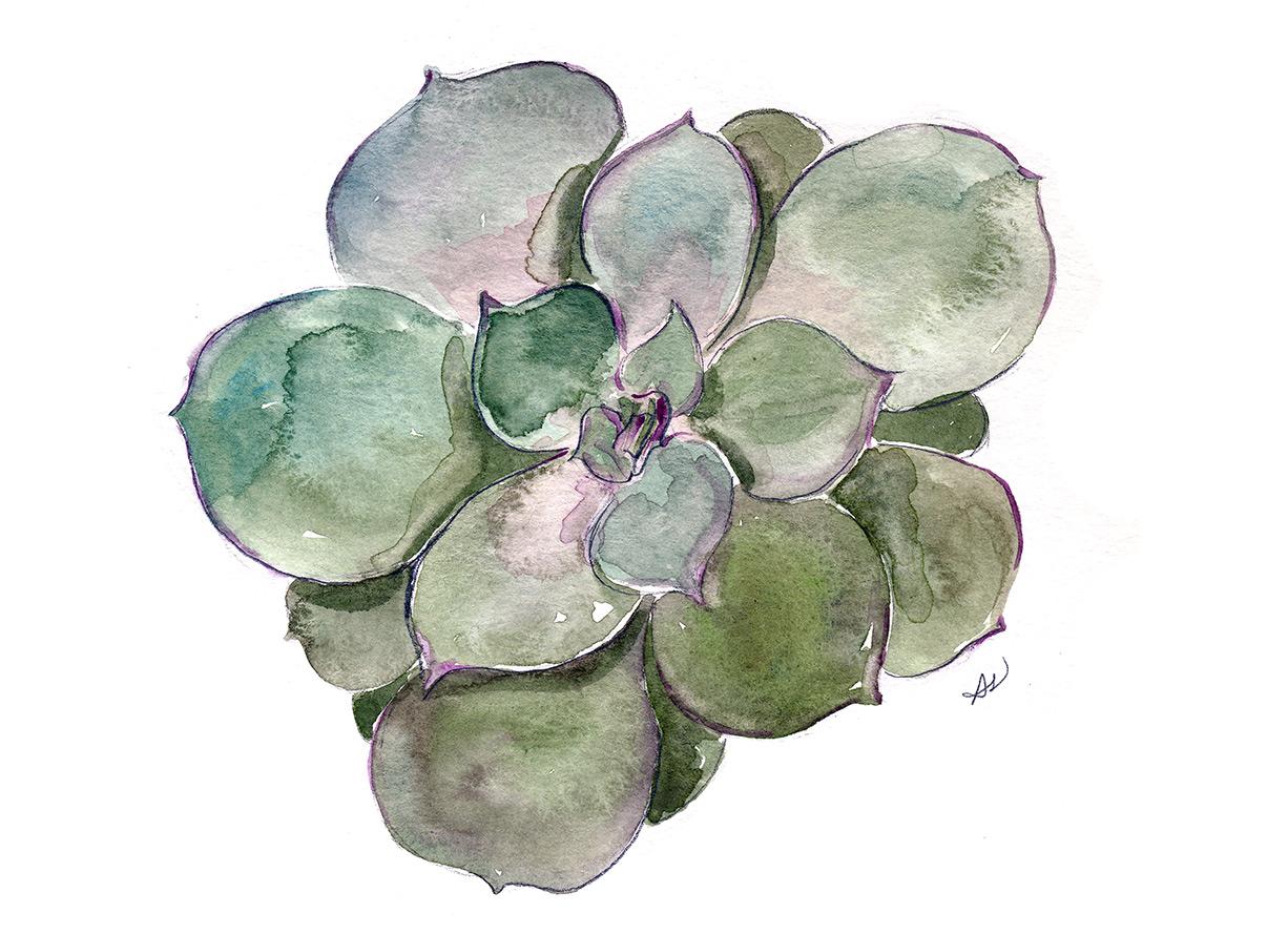 drawingsarah.com_succulent1.jpg