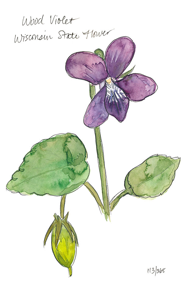 drawingsarah.com_113_365.jpg