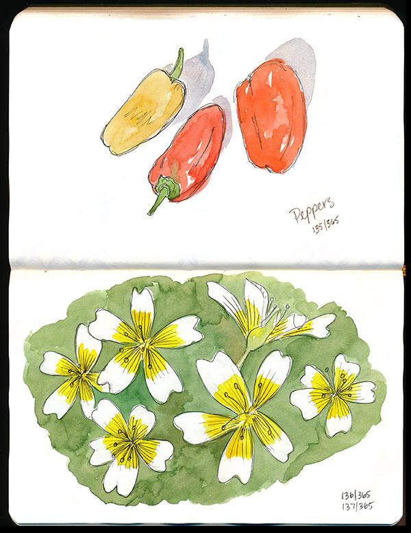drawingsarah.com | 135-137/365