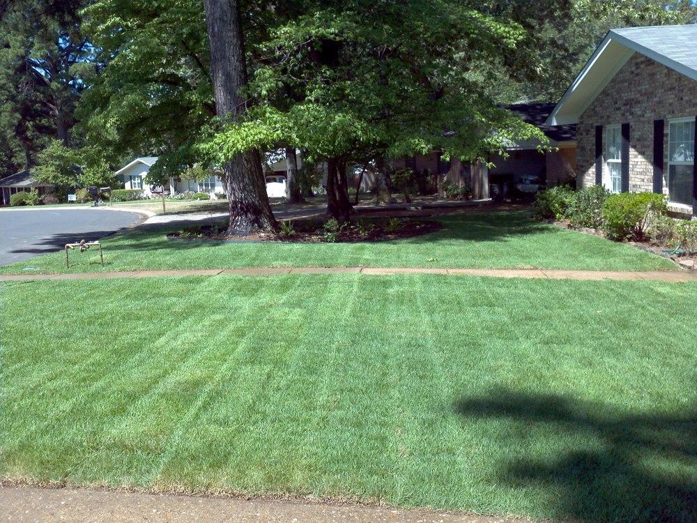 Whitlock Grass.jpg