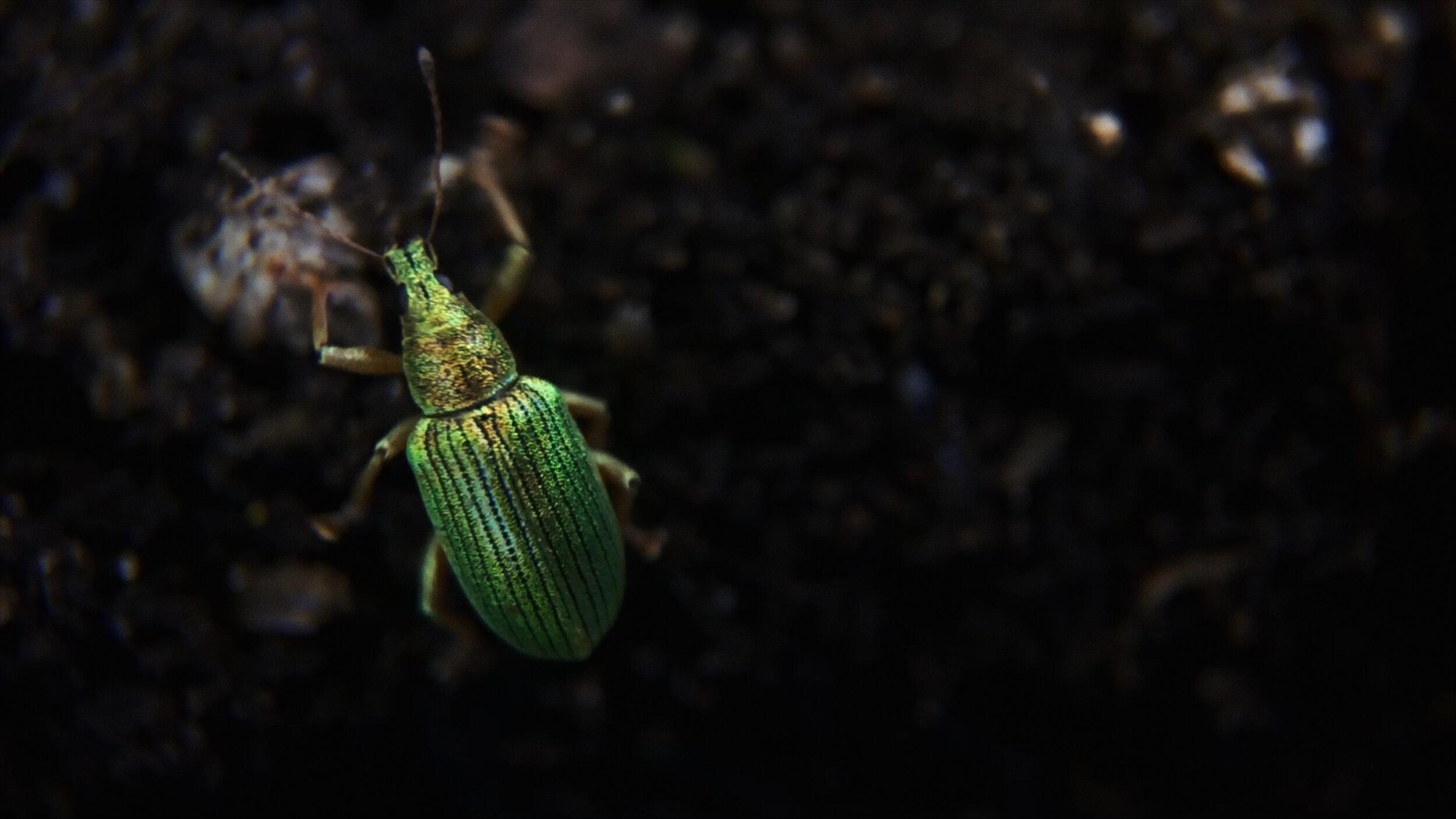 David+Blandy_The+World+After_2019_beetle 2.jpg