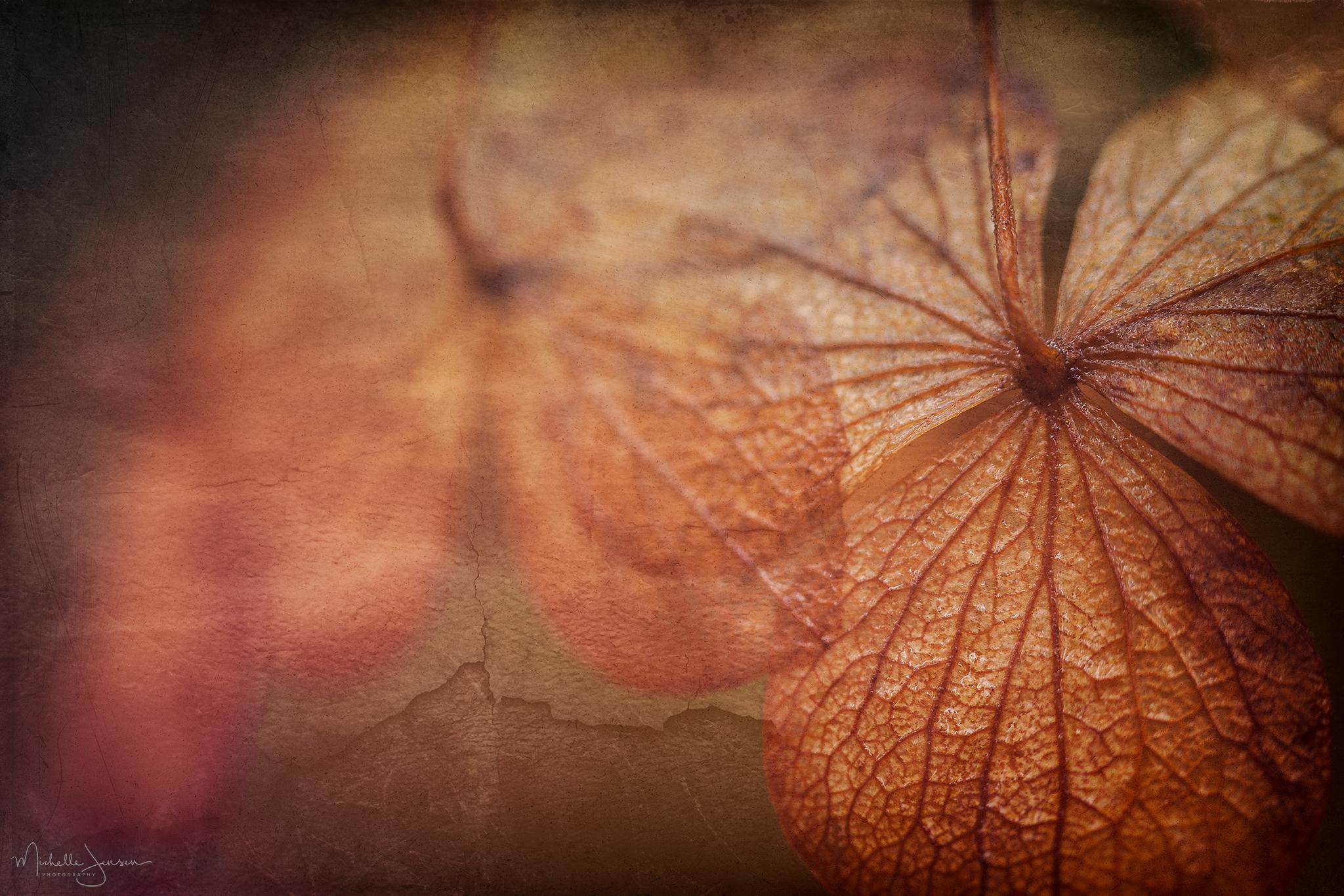 Autumn's Hydrangea