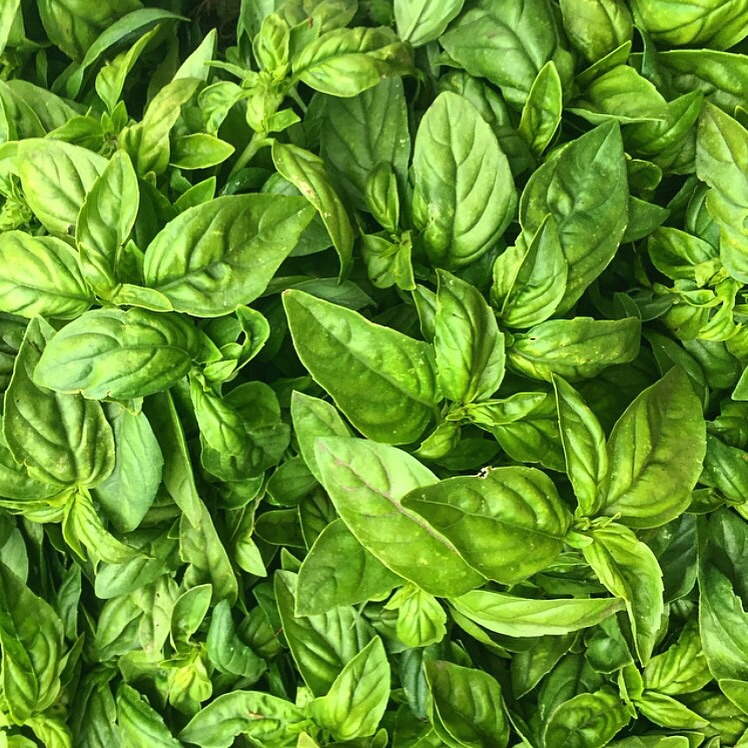 Genovese Basil from Everett Family Farm