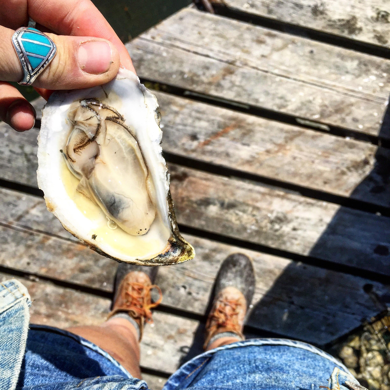 Pemaquid Oysters in Damariscotta, Maine