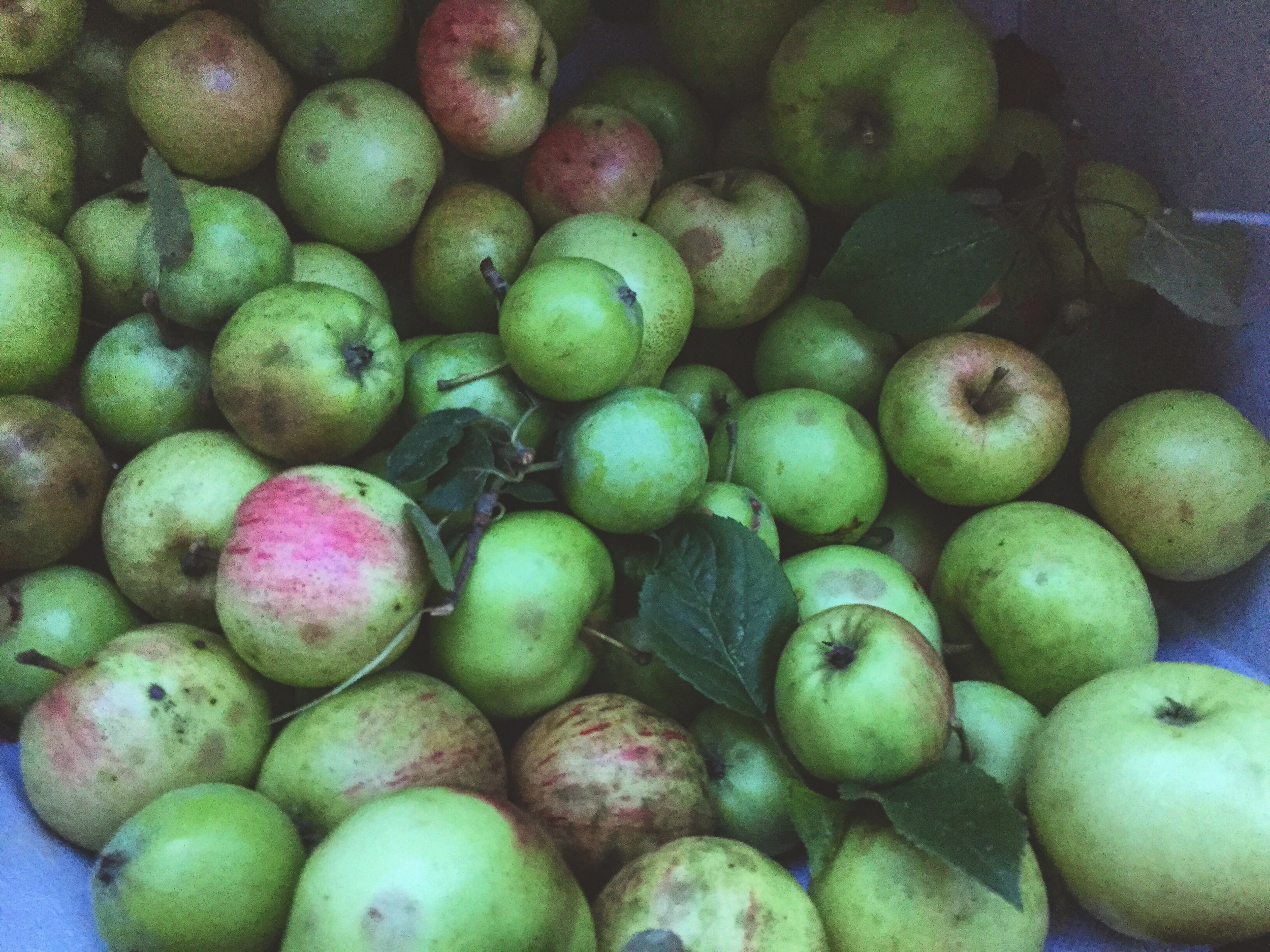 Maine foraged Apples