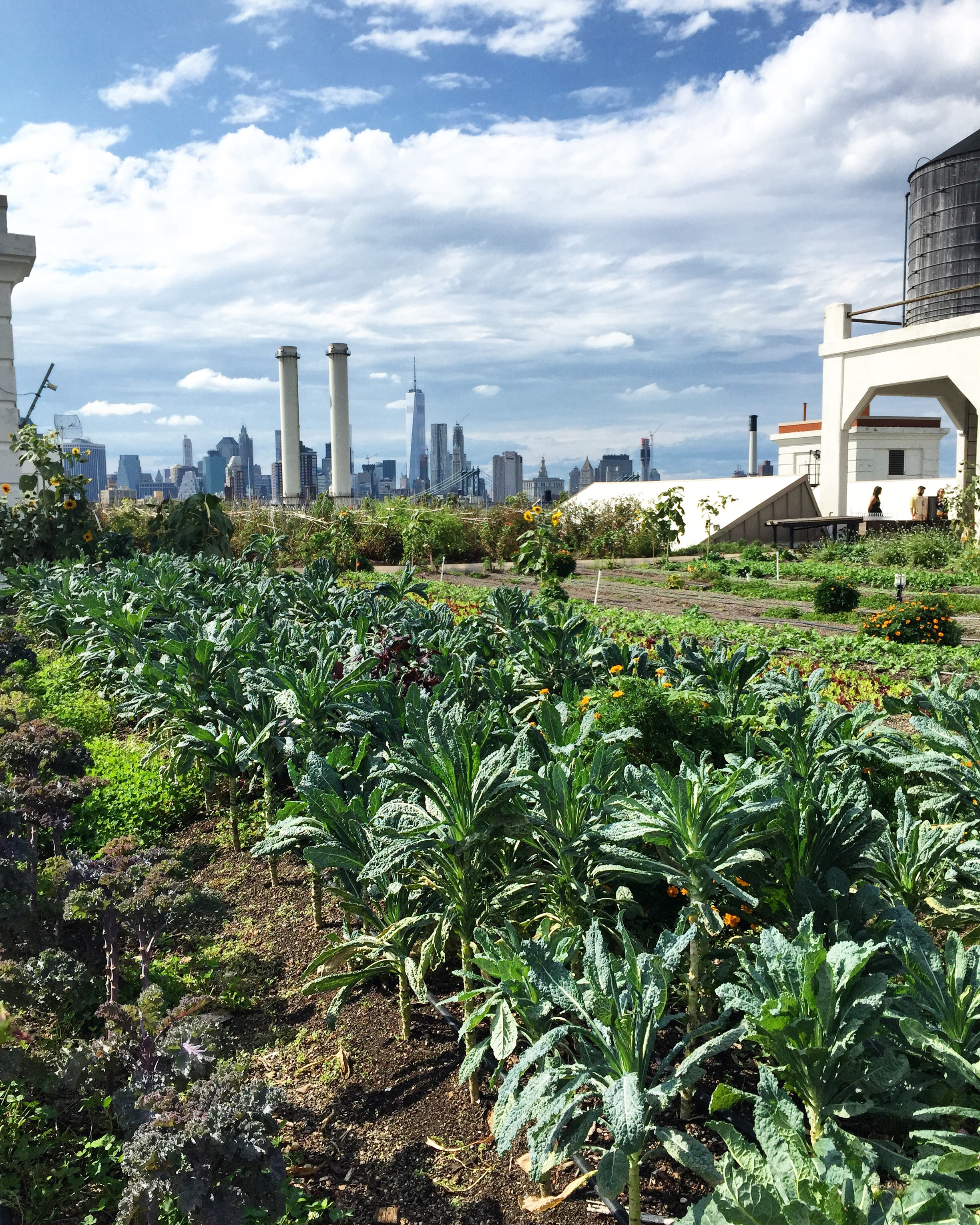 Kale City at Brooklyn Grange// Brooklyn, New York