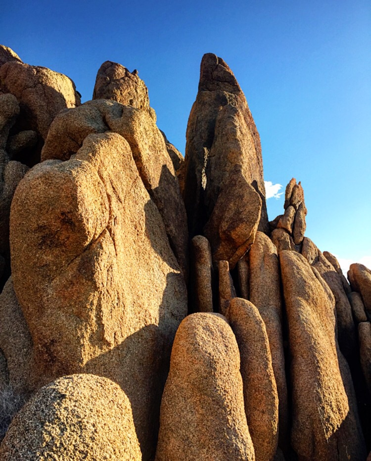 Shapes// Joshua Tree, California