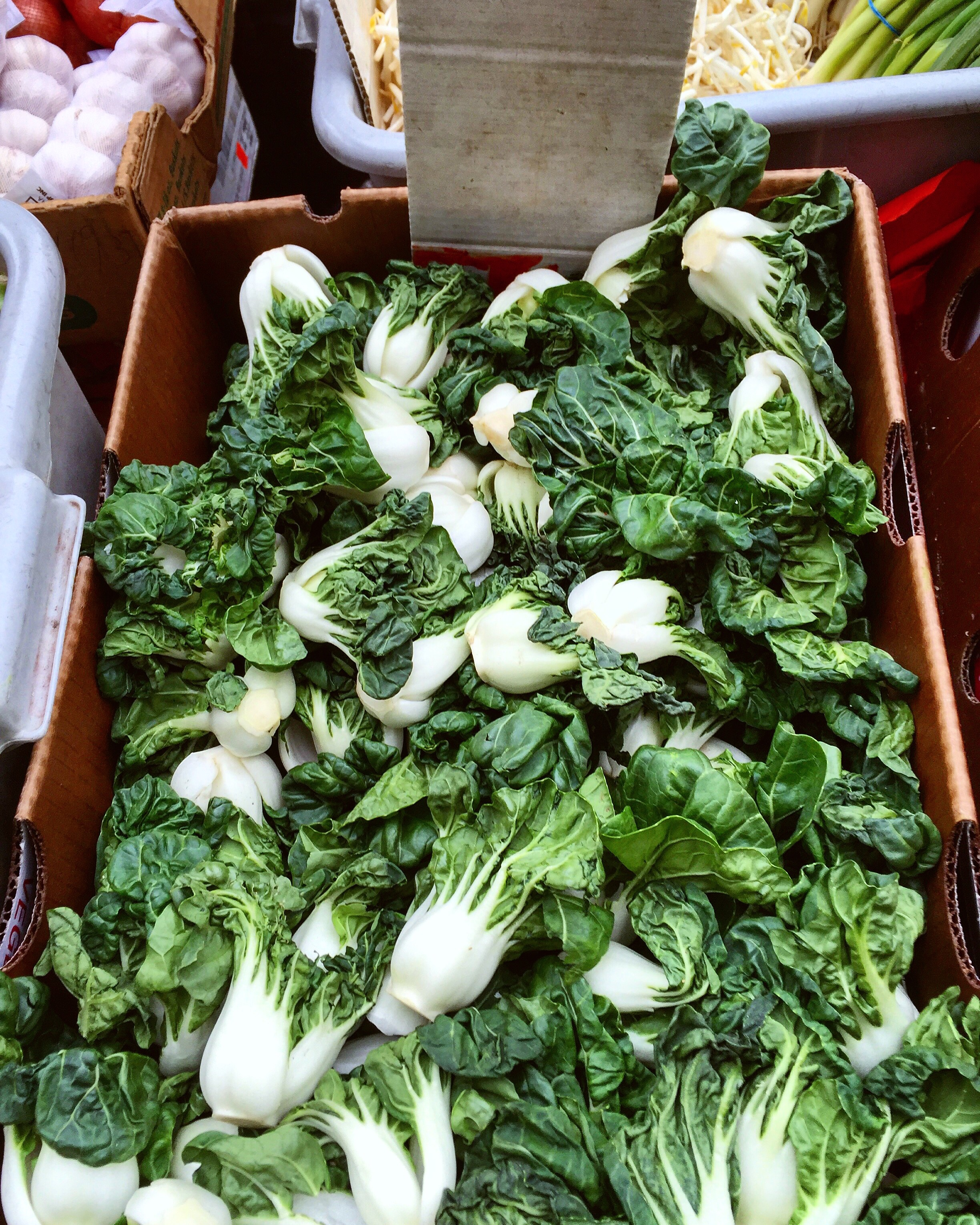 Bok Choy// New York, New York