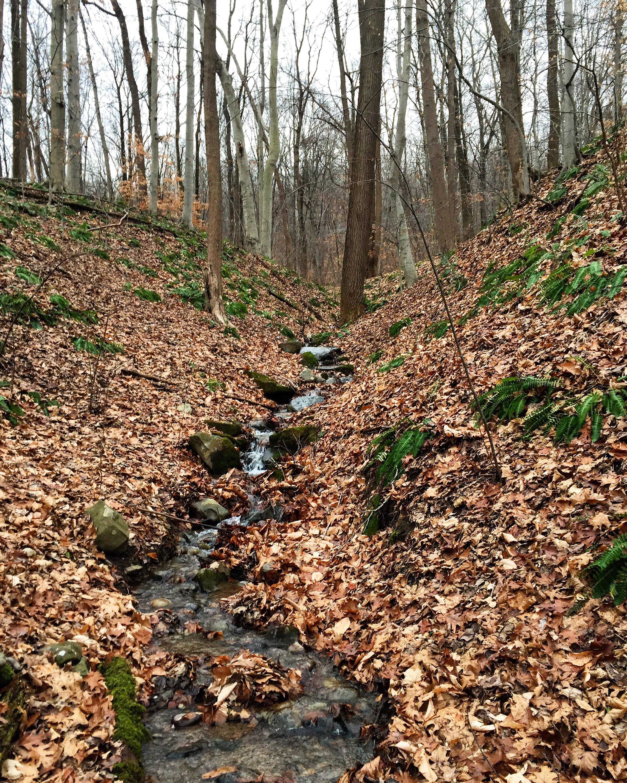 Creek Scenes// Upper Black Eddy, Pennsylvania