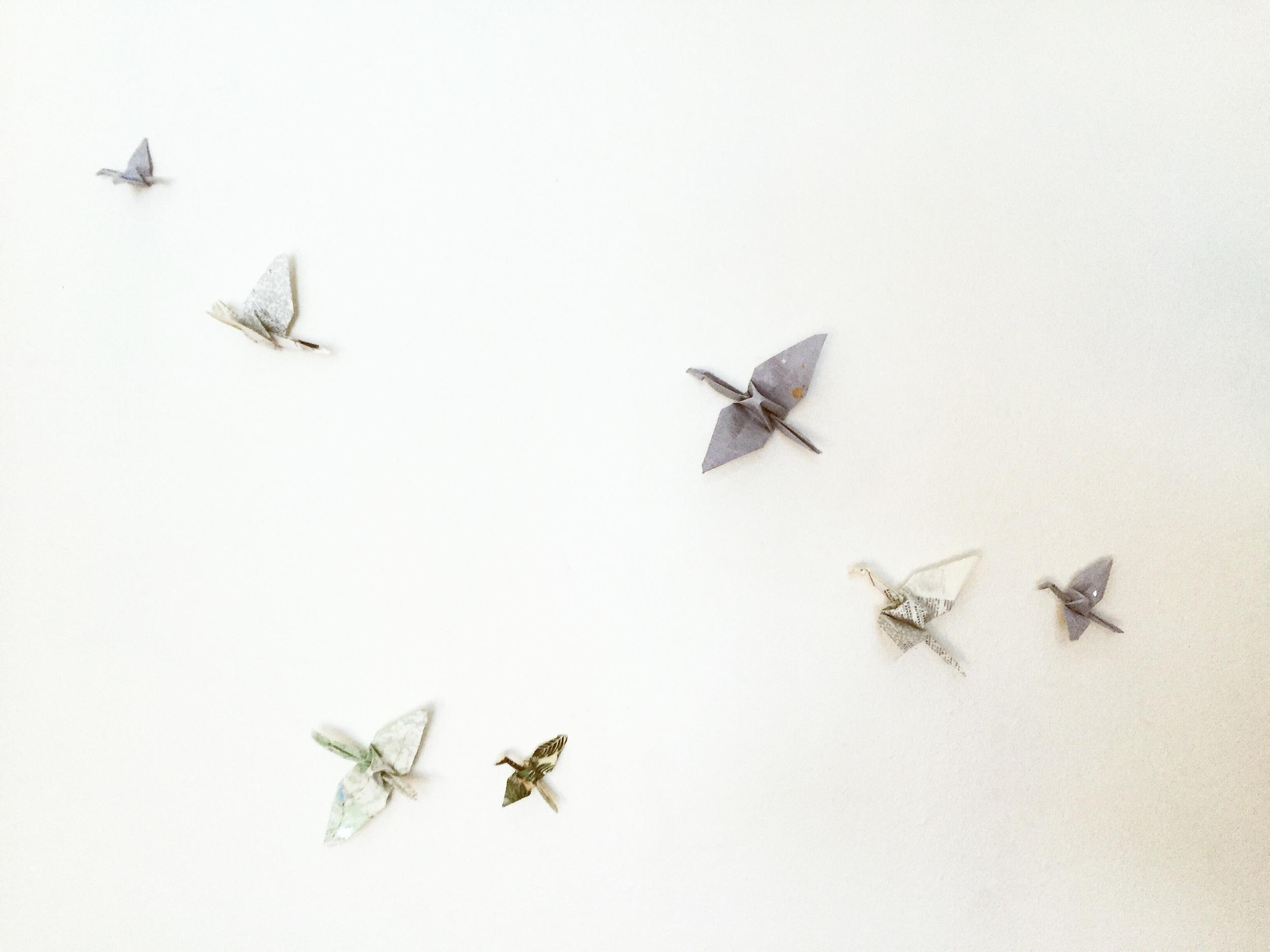 Snow Birds//Montréal, Québec