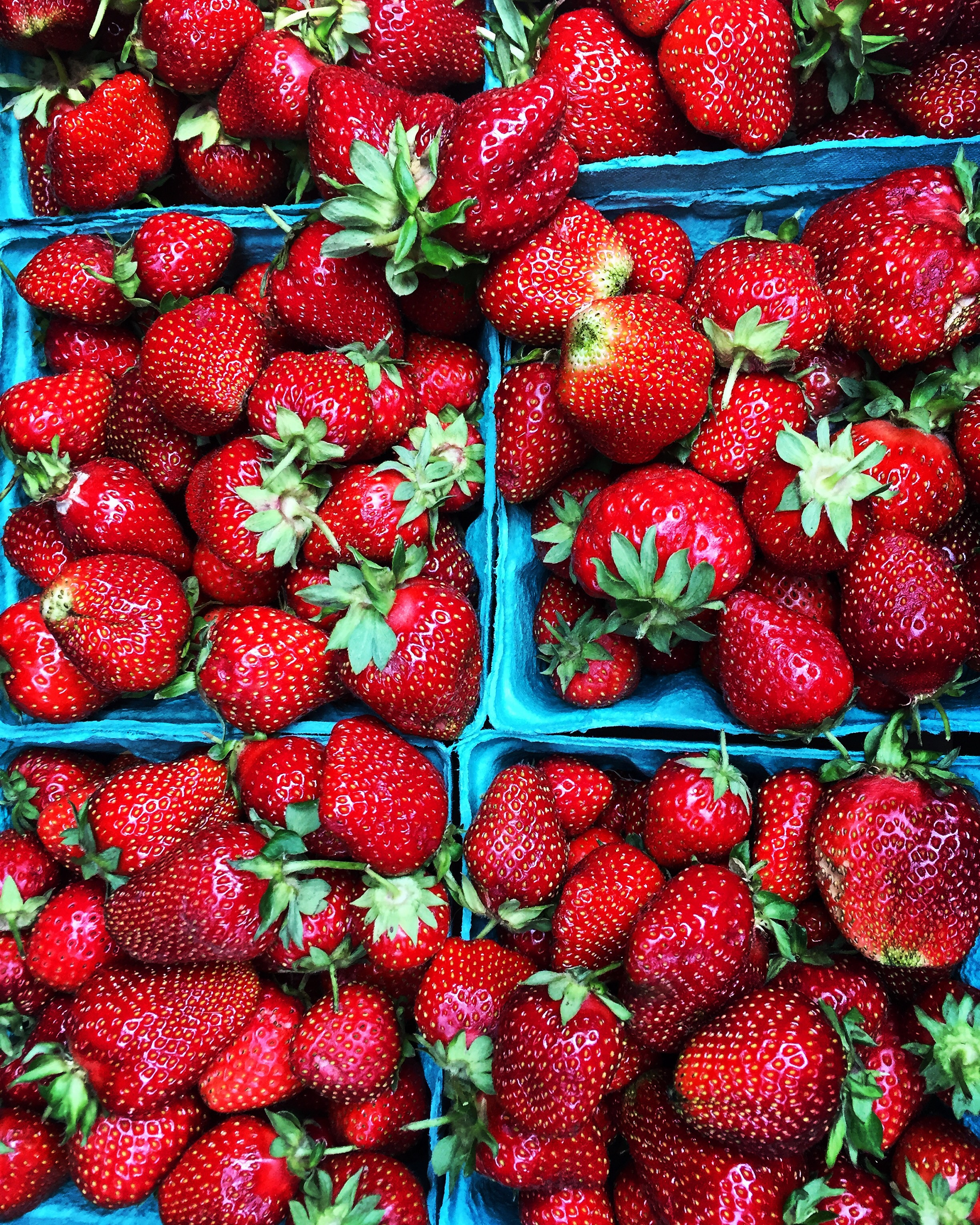 Trauger's Strawberries// Kintnersville, Pennsylvania