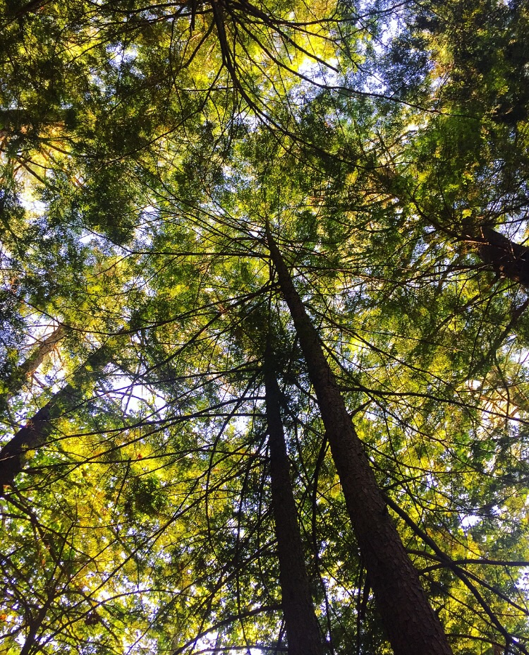 Canopy//Belgrade Lakes, Maine