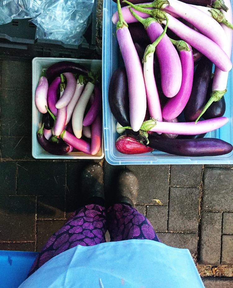 Eggplant Match// Bethlehem, Pennsylvania