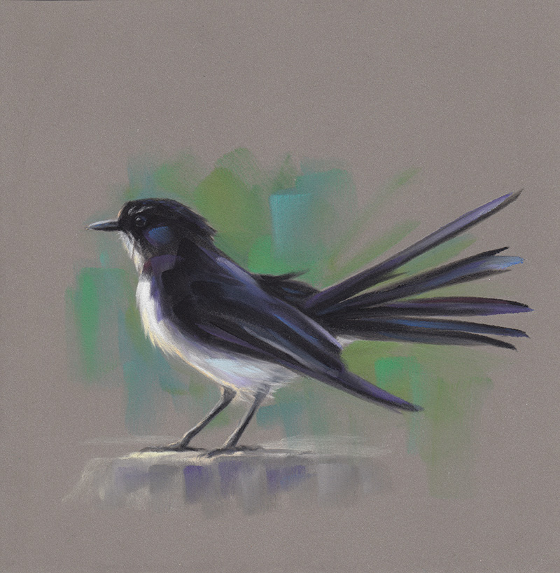 Willy Wagtail (2014)
