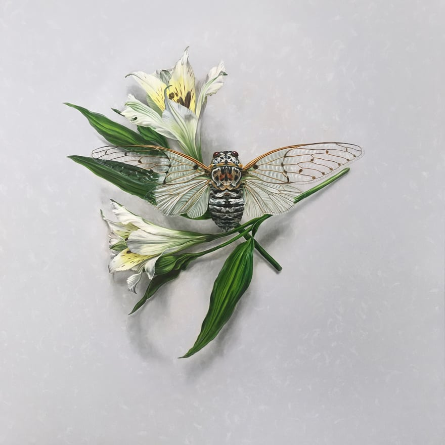 AlexLouisa-10-Alstroemeria-Cicada-120x120cm.jpg