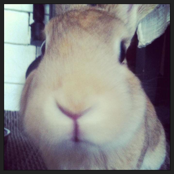 Star Hare