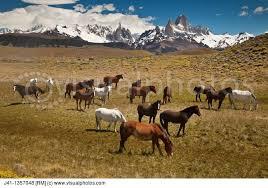 Magestic Patagonia