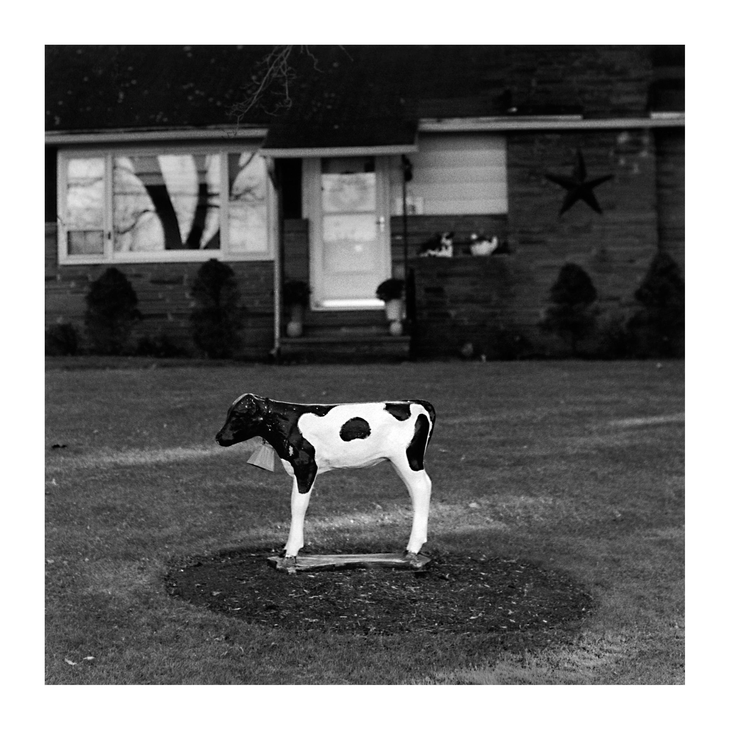 lawn calf.jpg