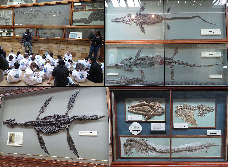 Marine reptile fossils