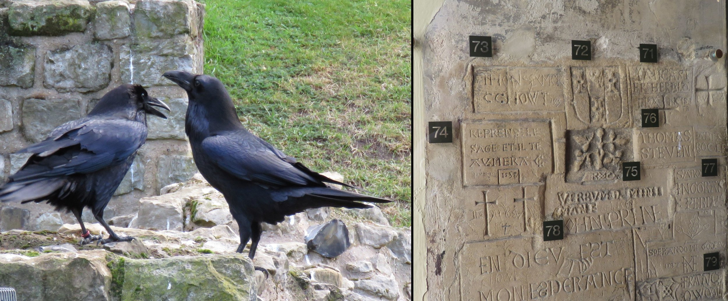 Ravens abound at the Tower; graffiti in the Bloody Tower.