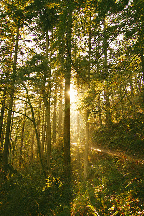 forest-grove.jpg