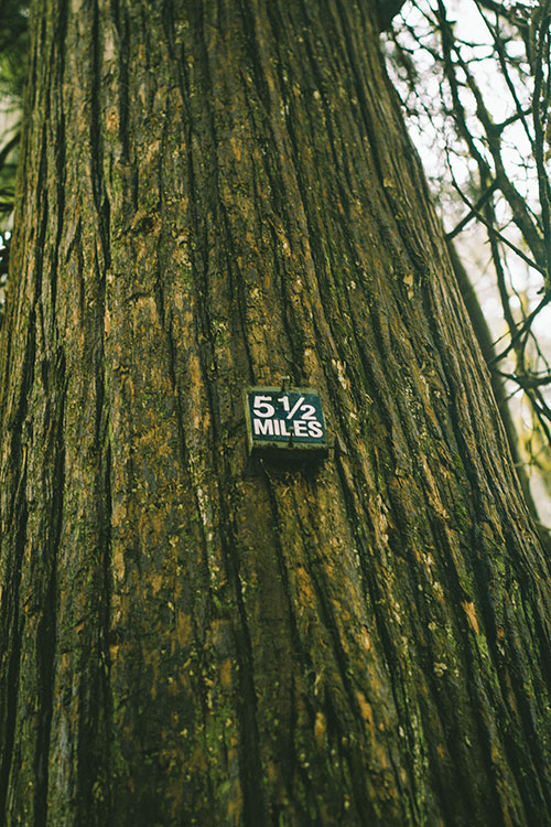 forest-grove5.jpg