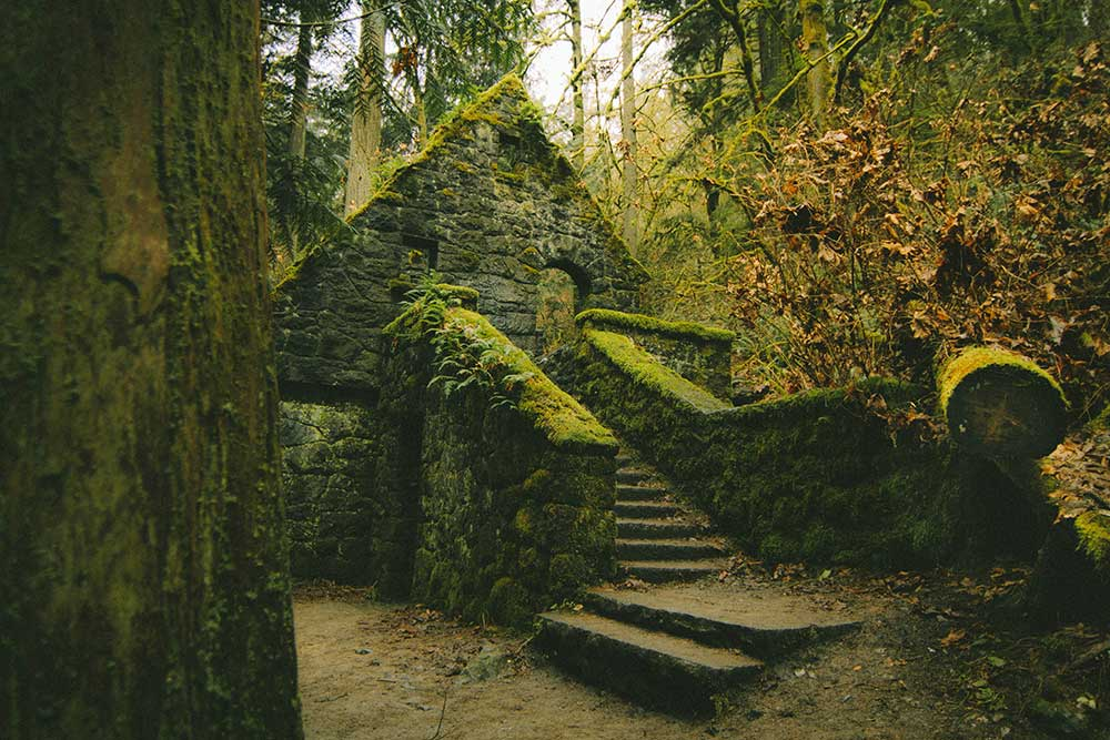 forest-grove6.jpg