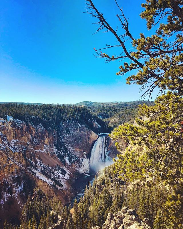 #grandcanyonoftheyellowstone #yellowstonenationalpark #yellowstone
