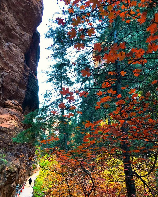Fall colors on point in the canyon.