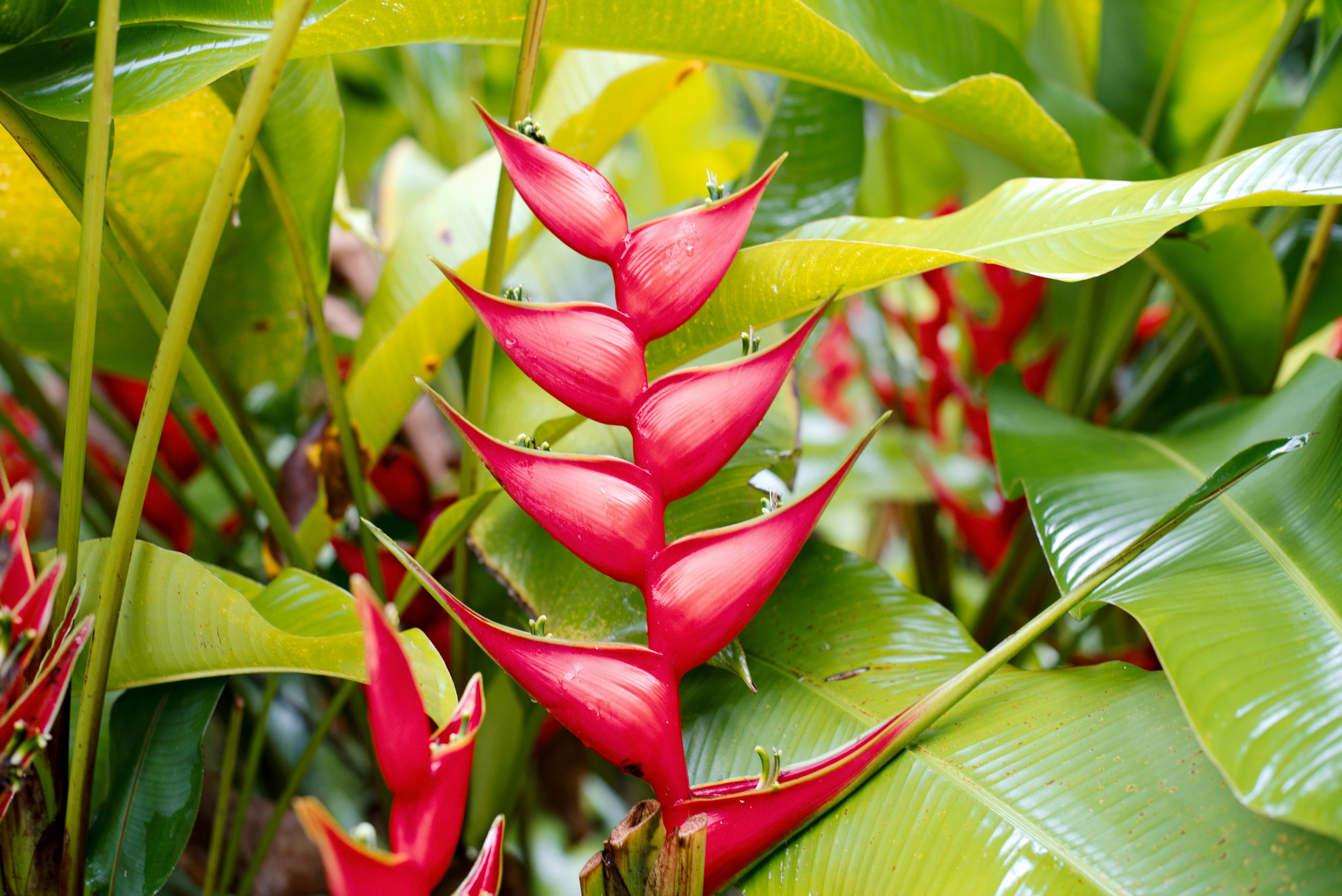 In the jungle, Palenque
