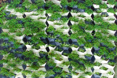 GREEN WALLS & GREEN ROOFS -