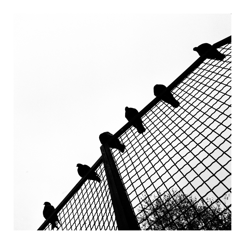 Hasseblad_x_001_Snapseed.jpg
