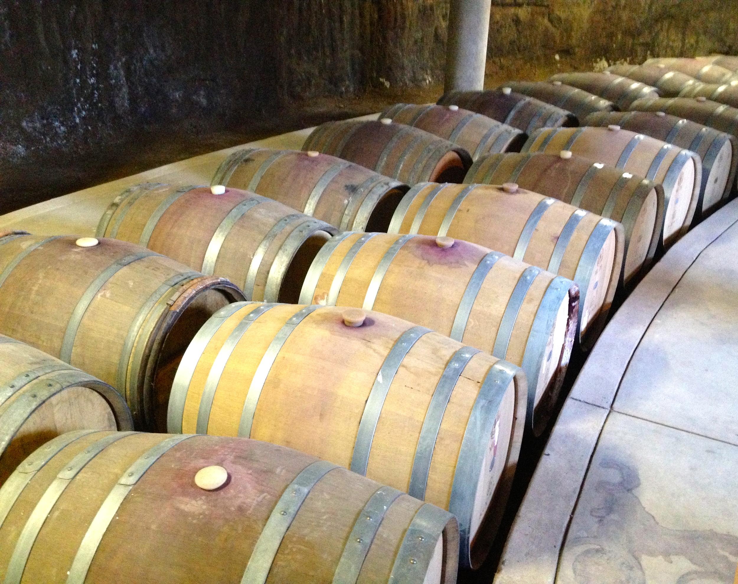 Alximia's barrel room