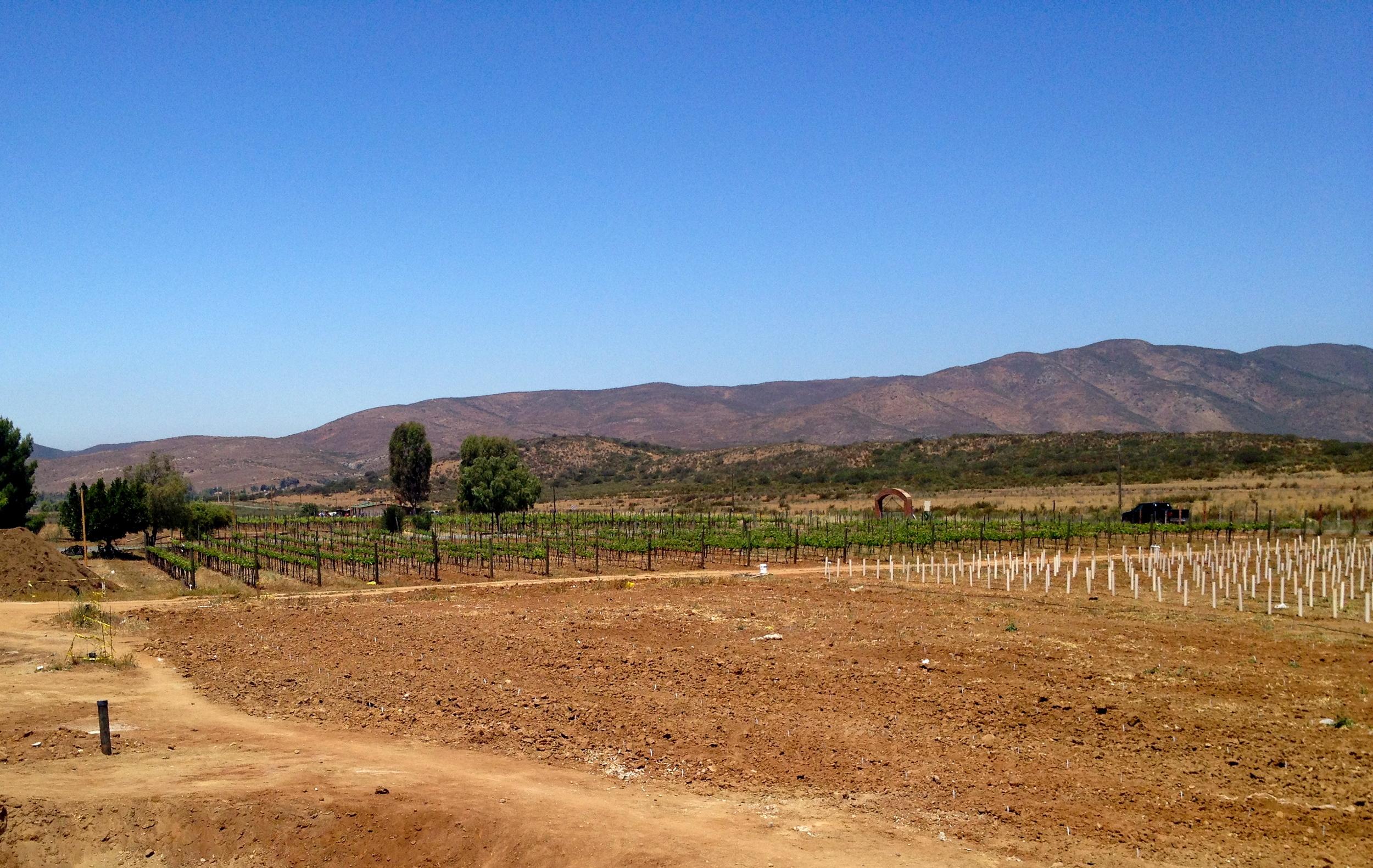 The vineyards at Alximia