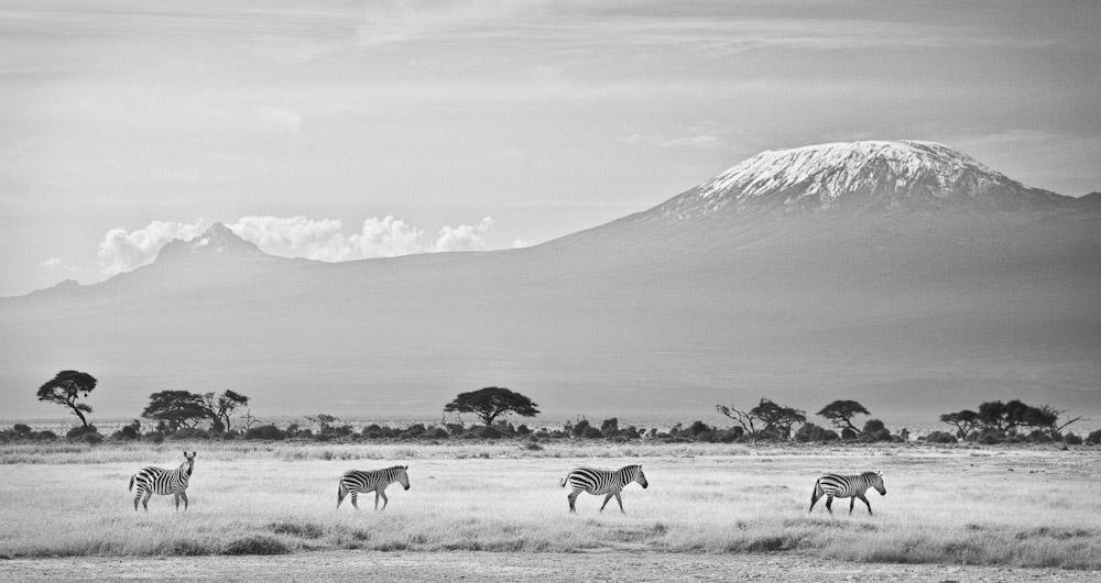 Snows of Kilimanjaro 1000.jpg