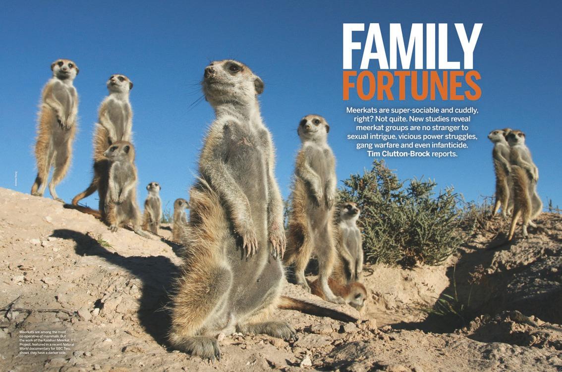 BBC Wildlife - Dec 2013.jpg