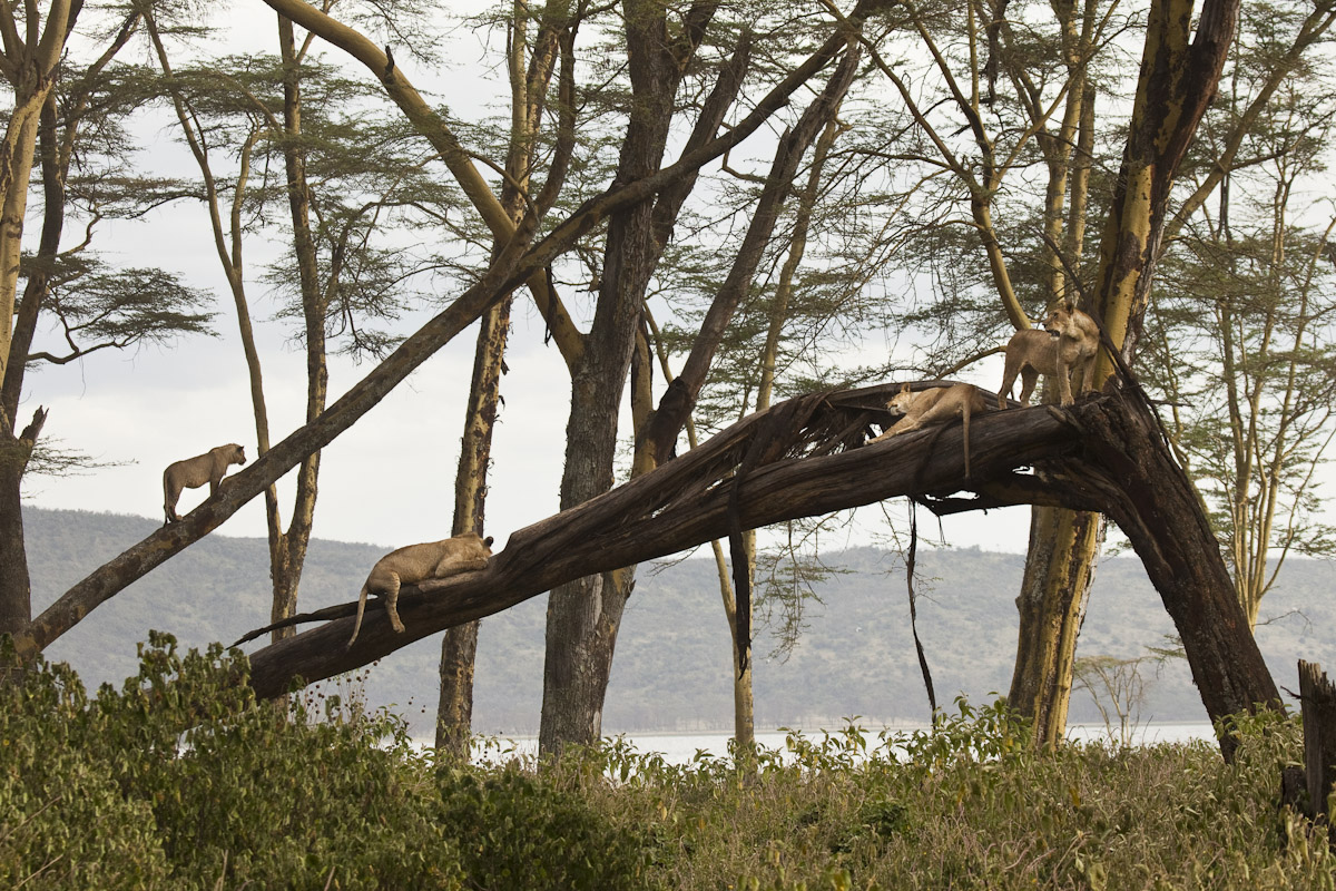 Kenya 2012-5.jpg