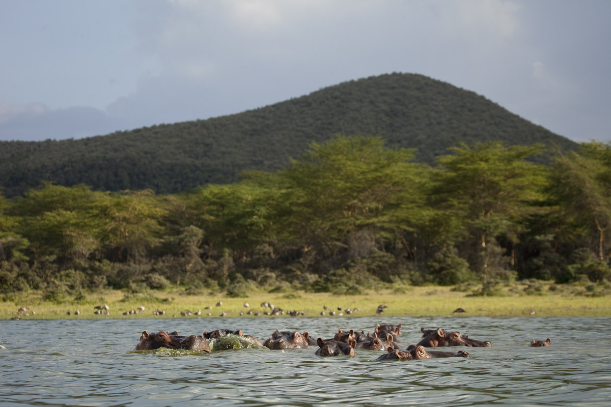 Kenya 2012-3.jpg