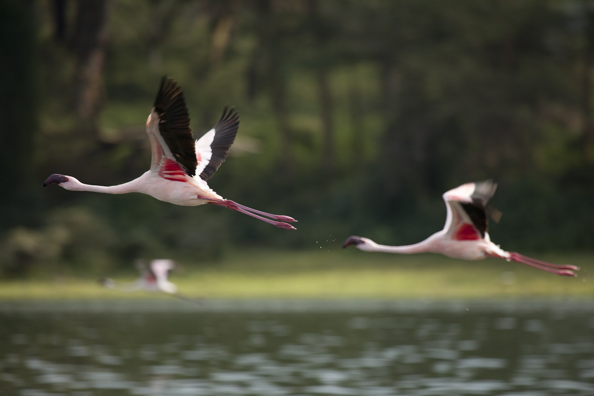 Kenya 2012-2.jpg