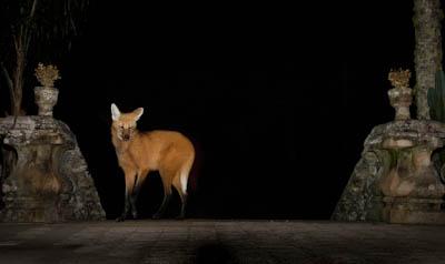 Mammalwatching (2 of 2).jpg